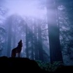 wolf_10_big
