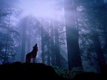 Brady Darnell is One Big Bad Wolf