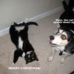 dewey-gracie-christmas1.jpg