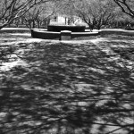 phoenix-monastery-shadow