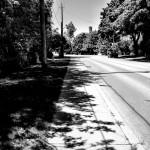 Shadow Foliage