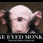 one-eyed-monkey