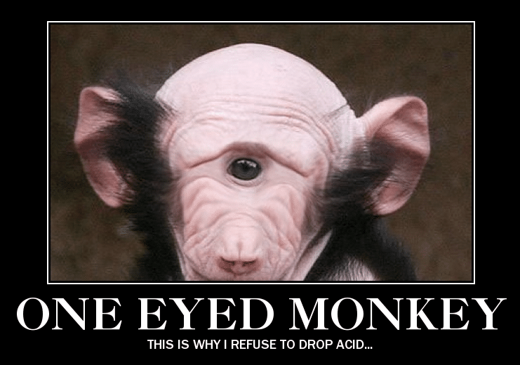 one-eyed-monkey