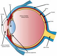 Three_Main_Layers_of_the_Eye