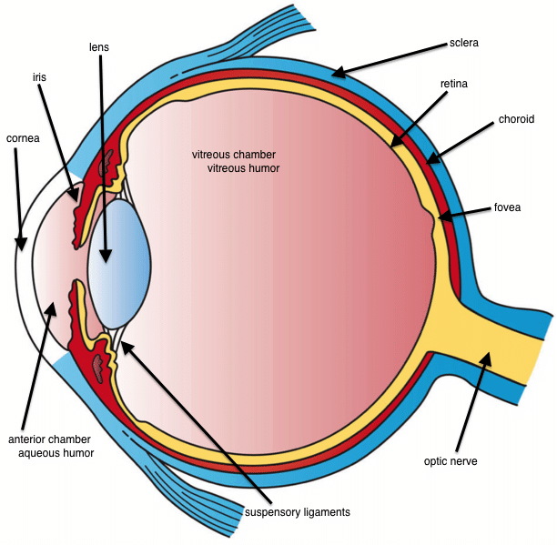 Some Guy Named Jake and His Live Eye Surgery! [Graphic, So, Um, FYI]