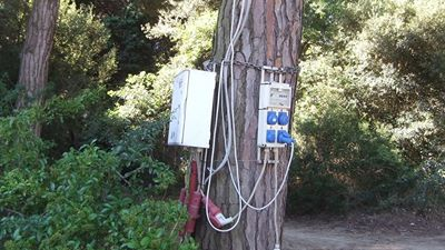 tree-power
